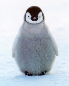 planet-earth-penguin